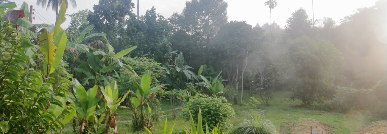 gaarawe eco-village khao sok thailand